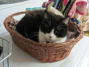 In Memorium - Friends of Felines Rescue Center