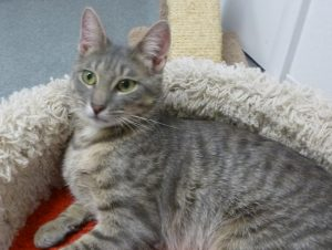 Alma cat