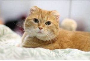Coralie cat